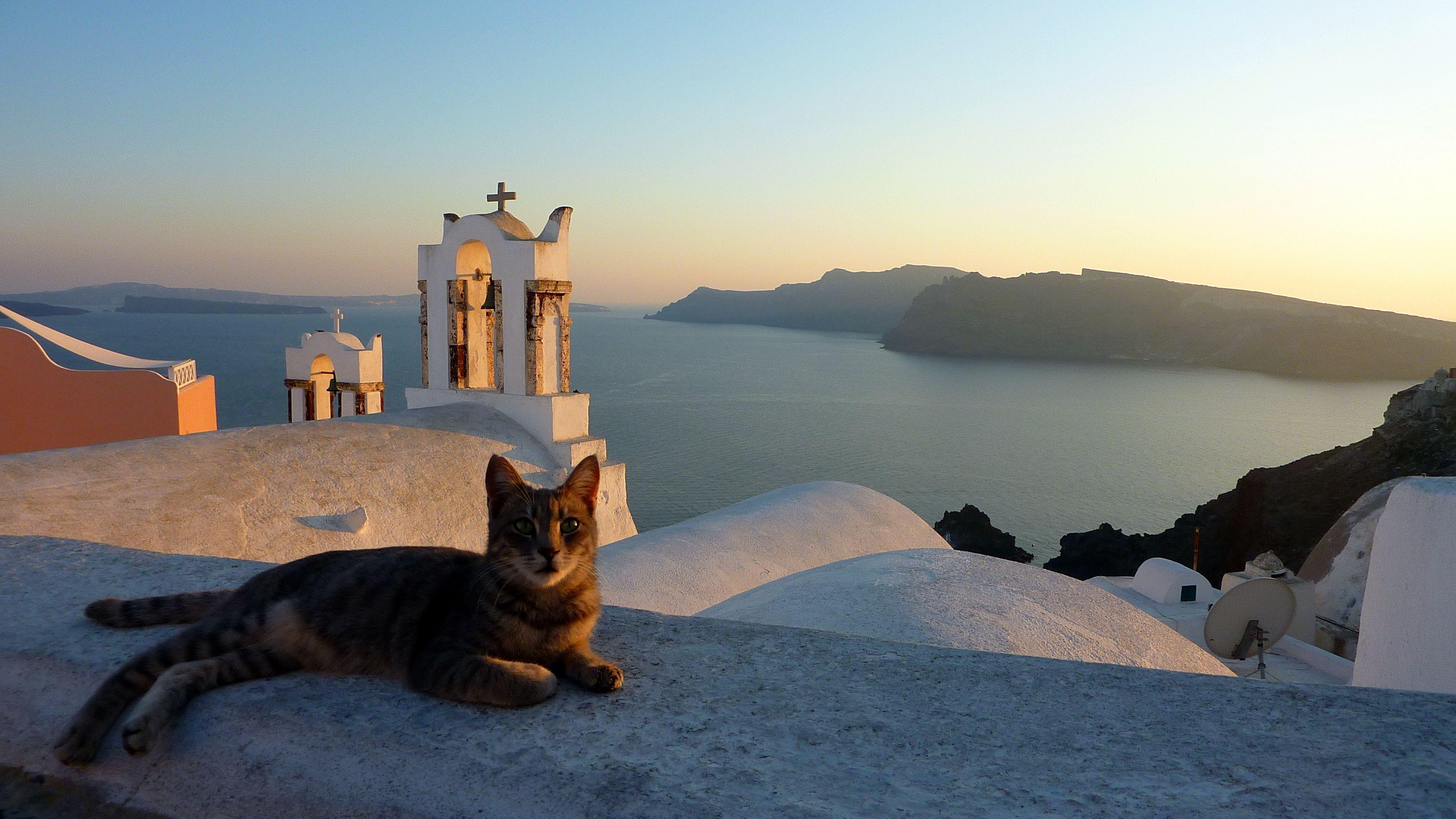 греческие кошки картинки фрукт экзотический