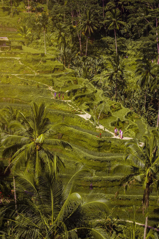 Убуд – зеленое сердце Бали. Что посмотреть и как добраться