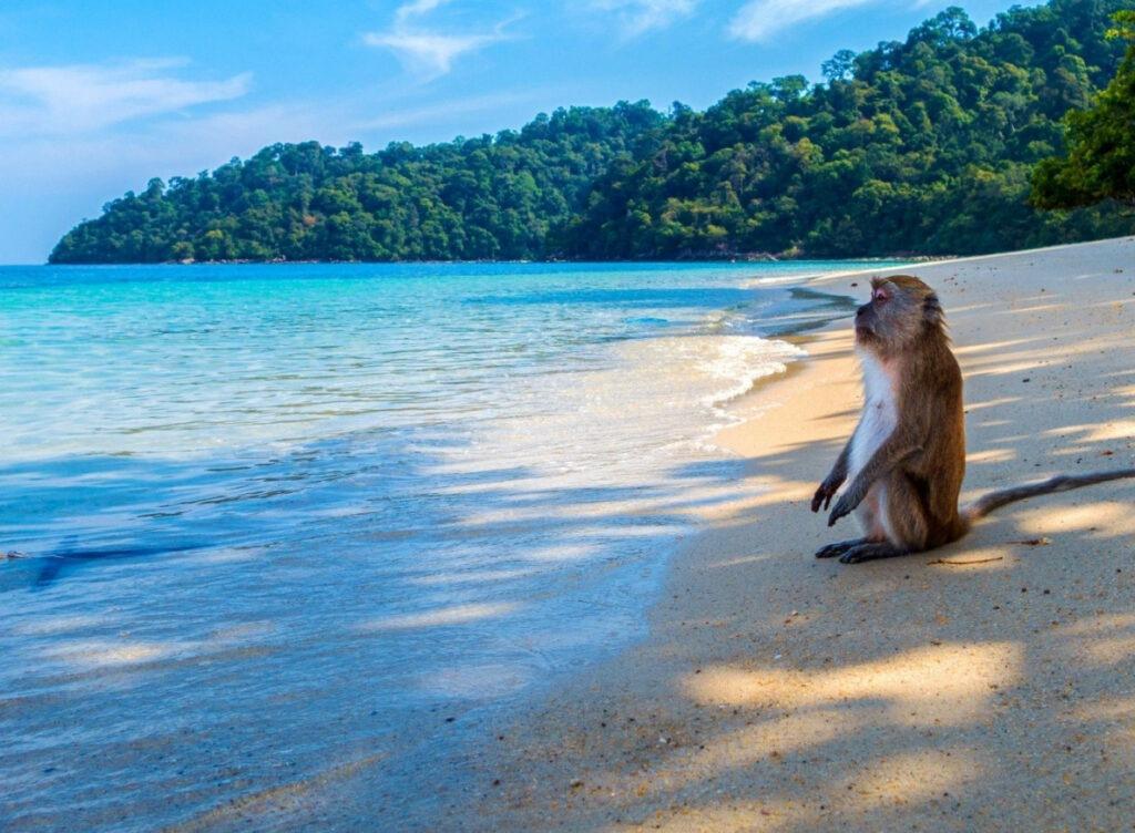 Как Таиланд планирует вернуть туристов в страну