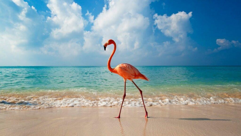 Пляжный отдых в Доминикане, остались ли водоросли на пляжах